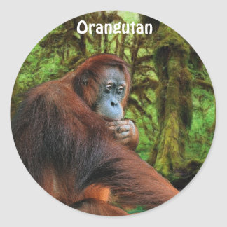 Orangutan Jungle Great Ape Primate Stickers