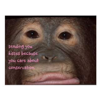 Orangutan Kisses for Conservation Post Cards