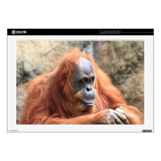 Orangutan Laptop Decal
