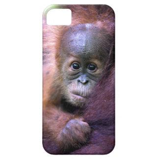Orangután lindo del bebé en Sumatra iPhone 5 Carcasas