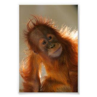 Orangután lindo del bebé arte fotográfico
