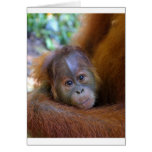 Orangután lindo del bebé tarjeta
