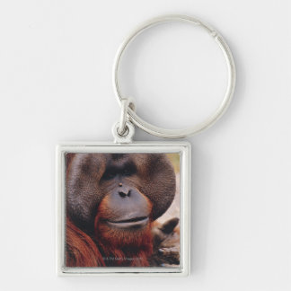 Orangután Llavero Cuadrado Plateado