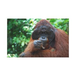 Orangutan male Borneo Rainforest Canvas Print