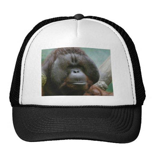 orangután masculino gorros bordados