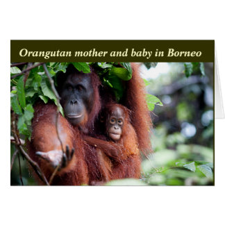 Orangutan Mother and Baby Card