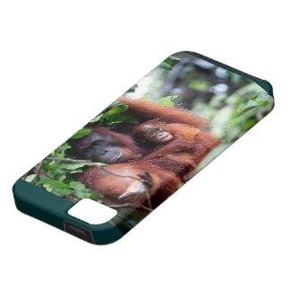 Orangutan Mother and Baby iPhone 5 Cases