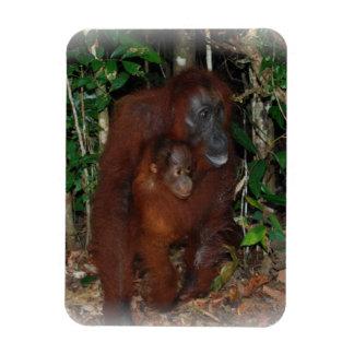 Orangutan Mother and Baby in Rainforest Rectangular Magnet