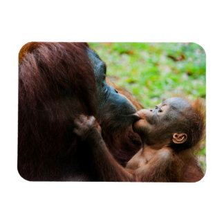 Orangutan mother and baby magnet