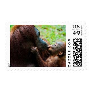 Orangutan mother and baby stamps
