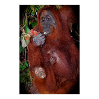 Orangutan Mother and Baby Posters