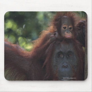 Orangutan Mother with Baby Mousepad
