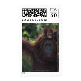 Orangutan Mother with Baby Postage