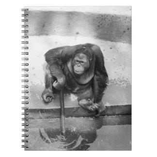 Orangutan Spiral Note Books