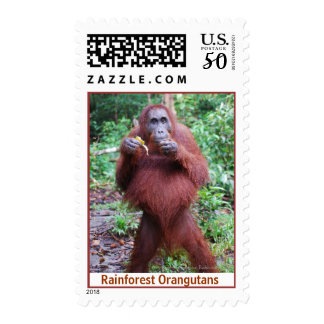 Orangutan on Island of Borneo Postage