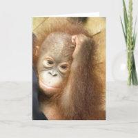 Orangutan Orphan Card card