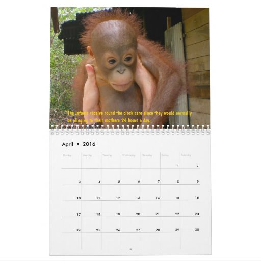 Orangutan Orphans Calendar