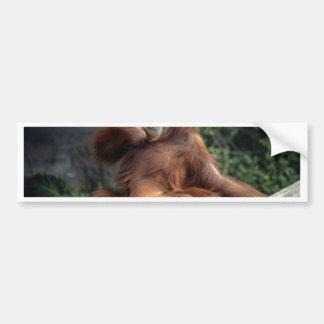 orangután pegatina para auto