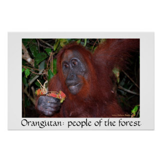Orangutan People of the Forest Posters