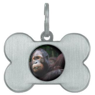 Orangutan Pet Name Tag