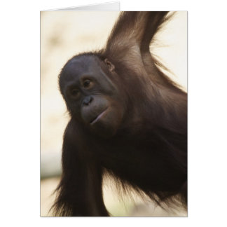 Orangutan Photo Card