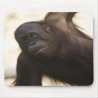 Orangutan Photo Mouse Pad
