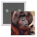 Orangután Pin Cuadrado