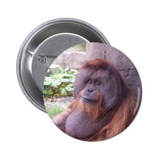 Orangutan Pinback Button