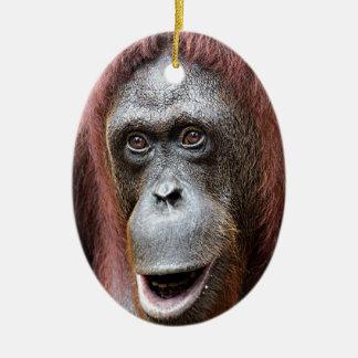 Orangutan pious Singapore zoo