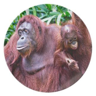 Orangutan pious Singapore zoo Plate