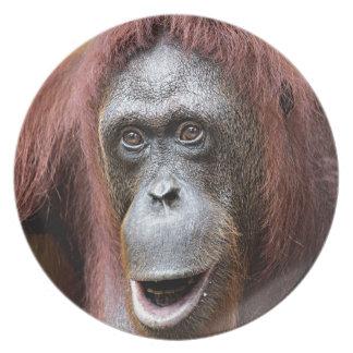 Orangutan pious Singapore zoo Party Plates