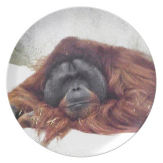 Orangutan Dinner Plates
