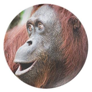 Orangutan Plate