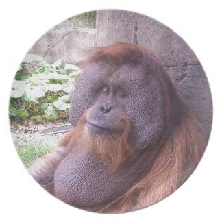Orangutan Party Plate