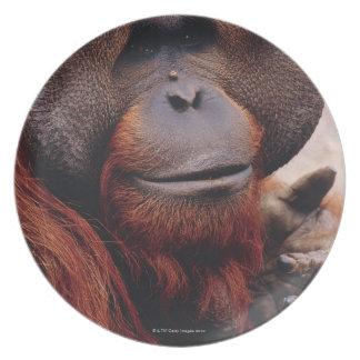Orangután Plato Para Fiesta