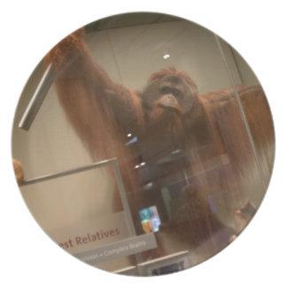 Orangutan (Pongo abelii) Dinner Plate