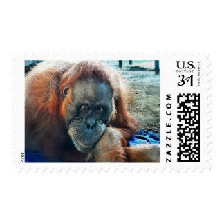Orangutan Portrait Stamps