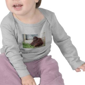 Orangutan Portrait Tee Shirts