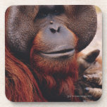 Orangután Posavaso