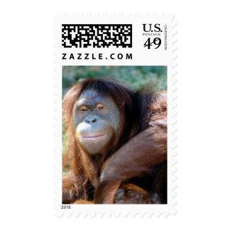 Orangutan Postage