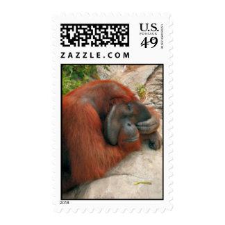 Orangutan Postage Stamps