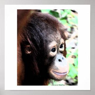 Orangutan Poster: The Original Tree Huggers Poster