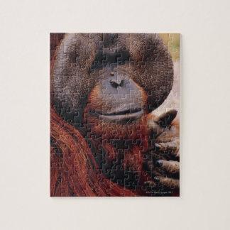 Orangután Puzzle