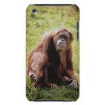 Orangután que se sienta en hierba y que mira la cubierta para iPod de barely there