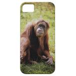 Orangután que se sienta en hierba y que mira la funda para iPhone SE/5/5s