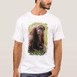 Orangután que se sienta en hierba y que mira la playera