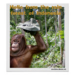 Orangutan rain forest welcome poster