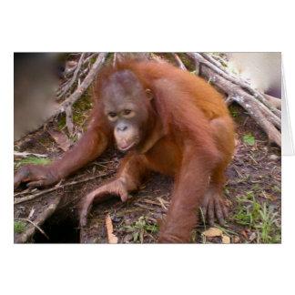 Orangutan Rainforest Mud Pie Stationery Note Card