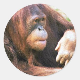 Orangutan Reclining Sticker
