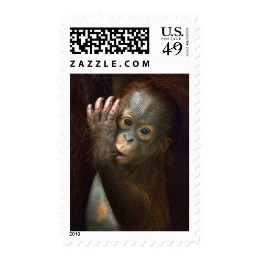Orangután Sello